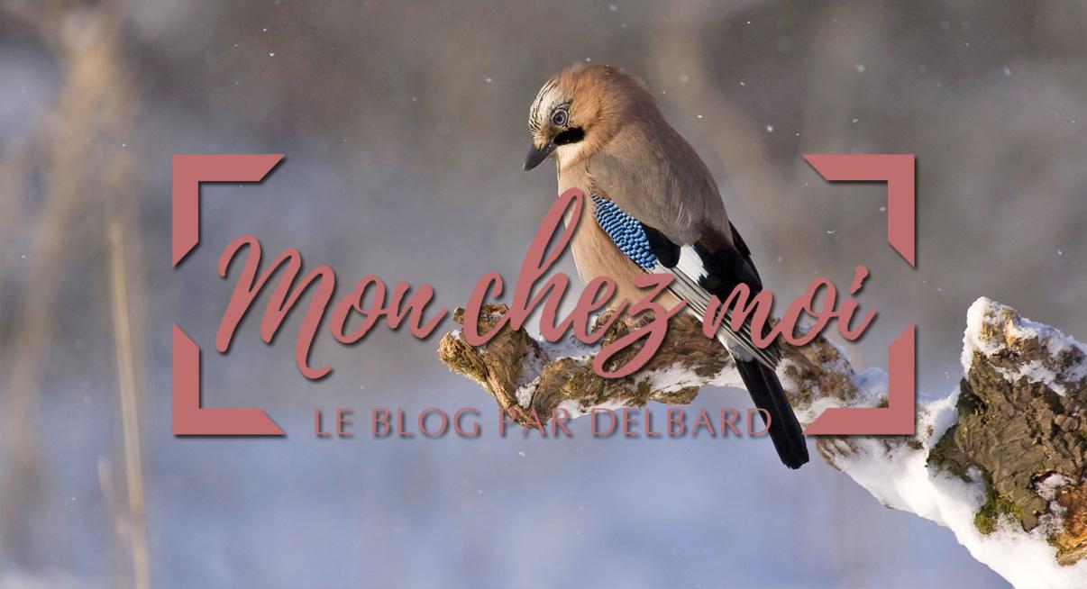 blog-delbard-jardin-janvier-oiseaux-nature