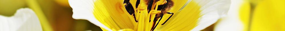 Pollinisateurs semer plantes Blog Delbard