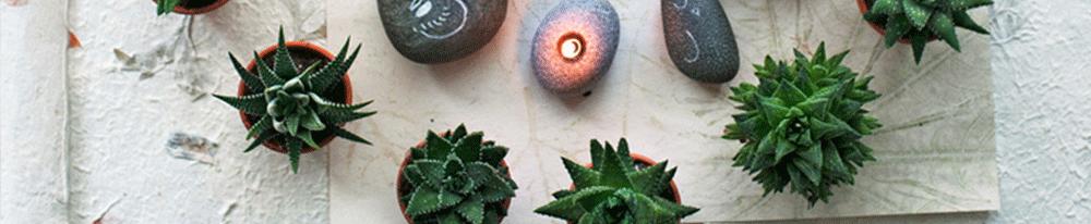 Aloé Véra plante intérieur installation maison appartement chaleur exposition Blog Delbard