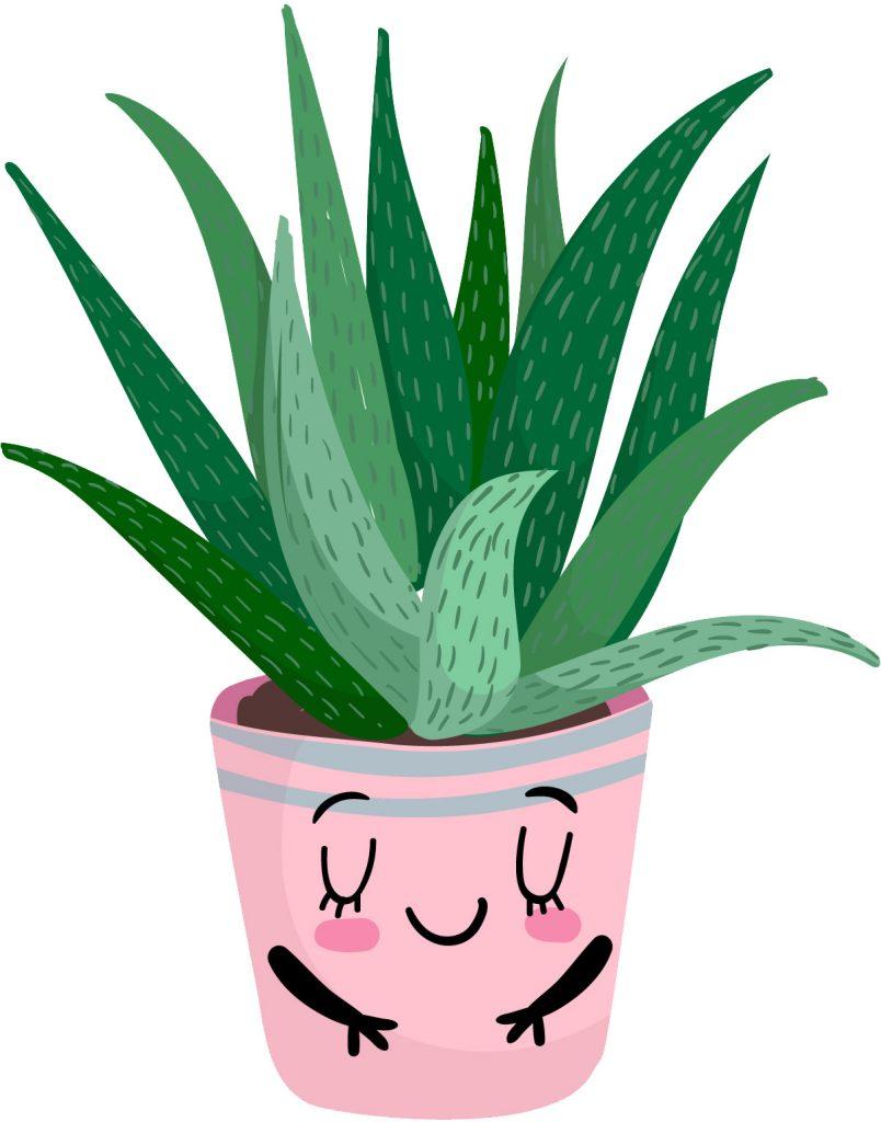 Aloevera Blog Delbard Plante Intérieur