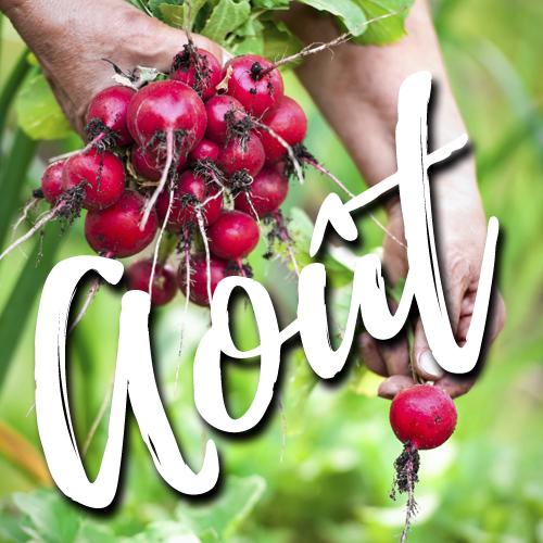 potager-blog-jardin-aout-conseils