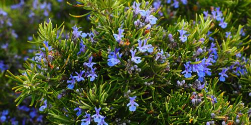 jardin delbard blog astuce jardin