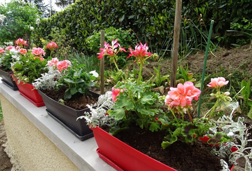 Balconniere estivale blog delbard plantes
