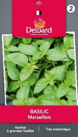 Graines Basilic jardin plantation Blog Delbard