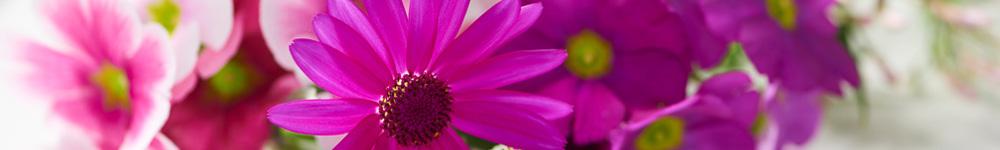 beautés-glacées-blog-hiver-delbard-jardin