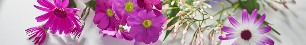 beautés-glacées-blog-delbard-jardin