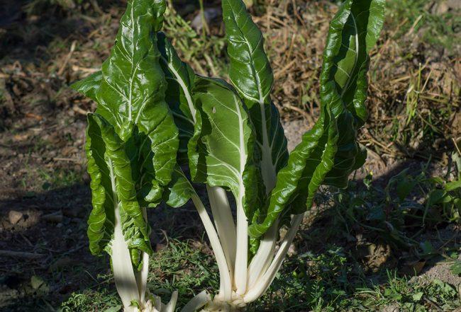 Légumes conseils recette gourmand Blog Delbard