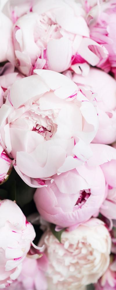 Blog Delbard Pivoine Jardin fleurs printemps
