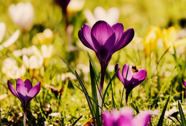 Bulbes plante jardin entretien conseil arrosage culture soin Blog Delbard