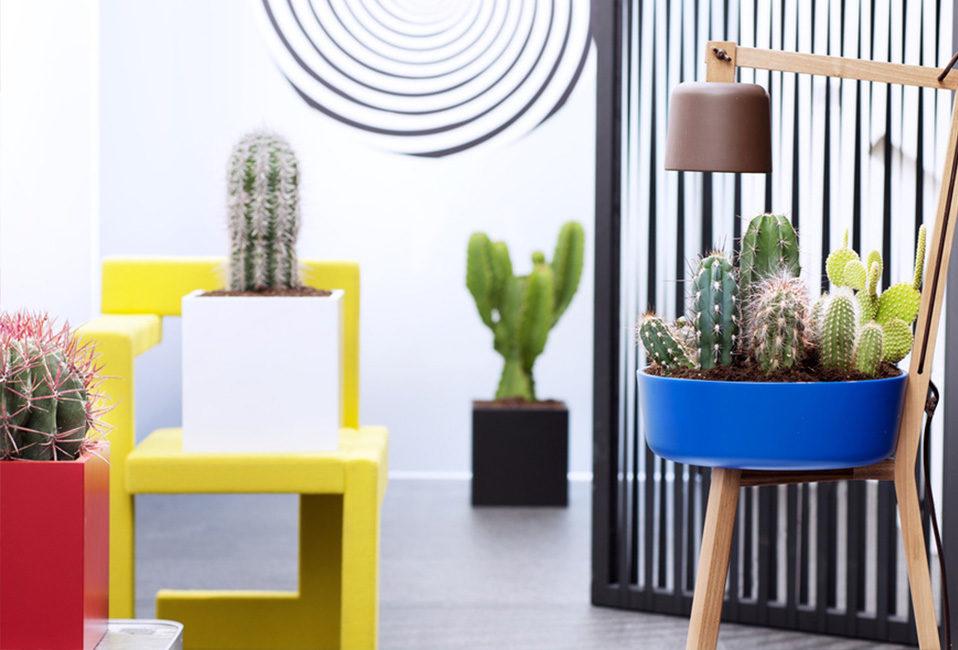 cactus plante intérieur design entretien plantation maison arrosage Blog Delbard