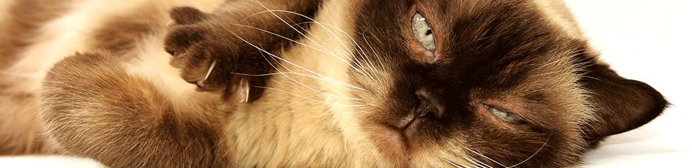Animaux chats vacances papiers démarches pays Blog Delbard
