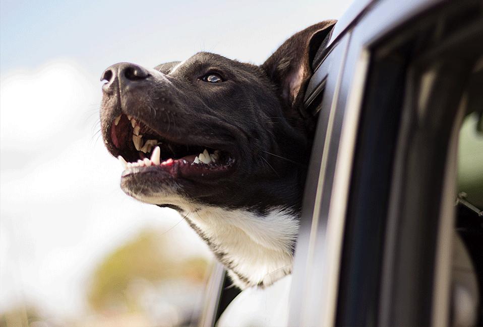 Animaux chien vacances trajets été Blog Delbard