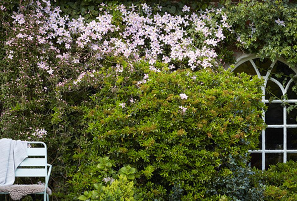 clematite vivace arbuste plante jardin printemps entretien conseils blog delbard