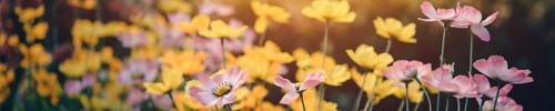 conseils vivaces blog delbard climat fleur