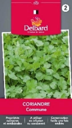 Graines Coriandre Blog Delbard planter jardin