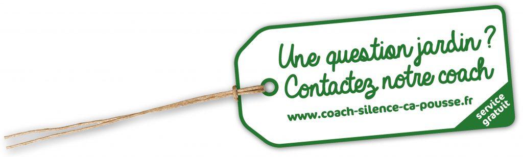 hortensia-coach-conseils-jardin-astuce-blog-delbard