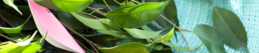 Ficus benjamina entretien soins maladies intérieur plante verte design pot Blog Delbard