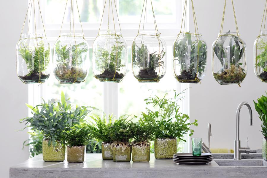 Plante Delbard Fougère Blog Jardin