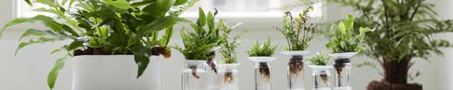 Fougere Delbard Blog plante intérieur