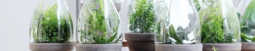 Delbard blog fougère plante verte intérieur