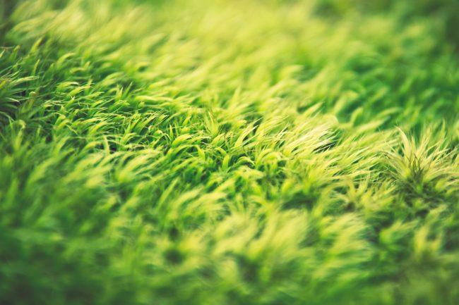 gazon-blog-delbard-jardin