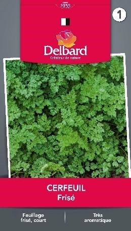 Graines Cerfeuil Blog Delbard jardin aromatique plantes grillade
