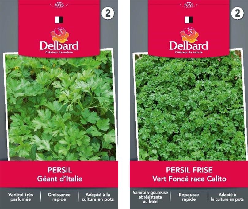 Graines Persil Frise Blog Delbard jardin plantation