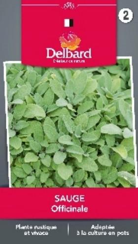 Graines Sauge planter jardin Blog Delbard aromatique