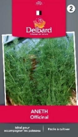 Graines Aneth aromatiques Blog Delbard jardin plante plantation