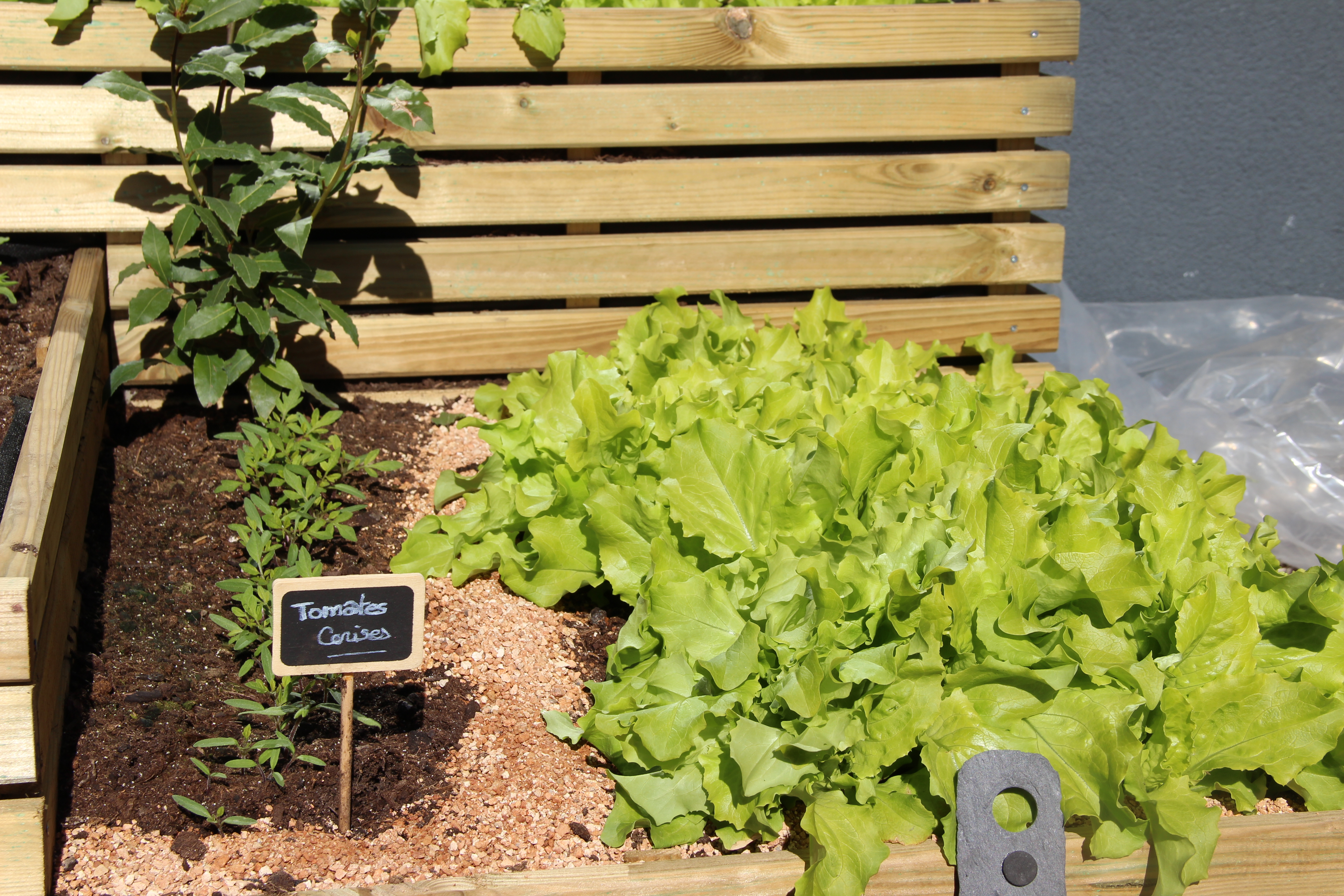 salades-blog-delbard-jardin-potager
