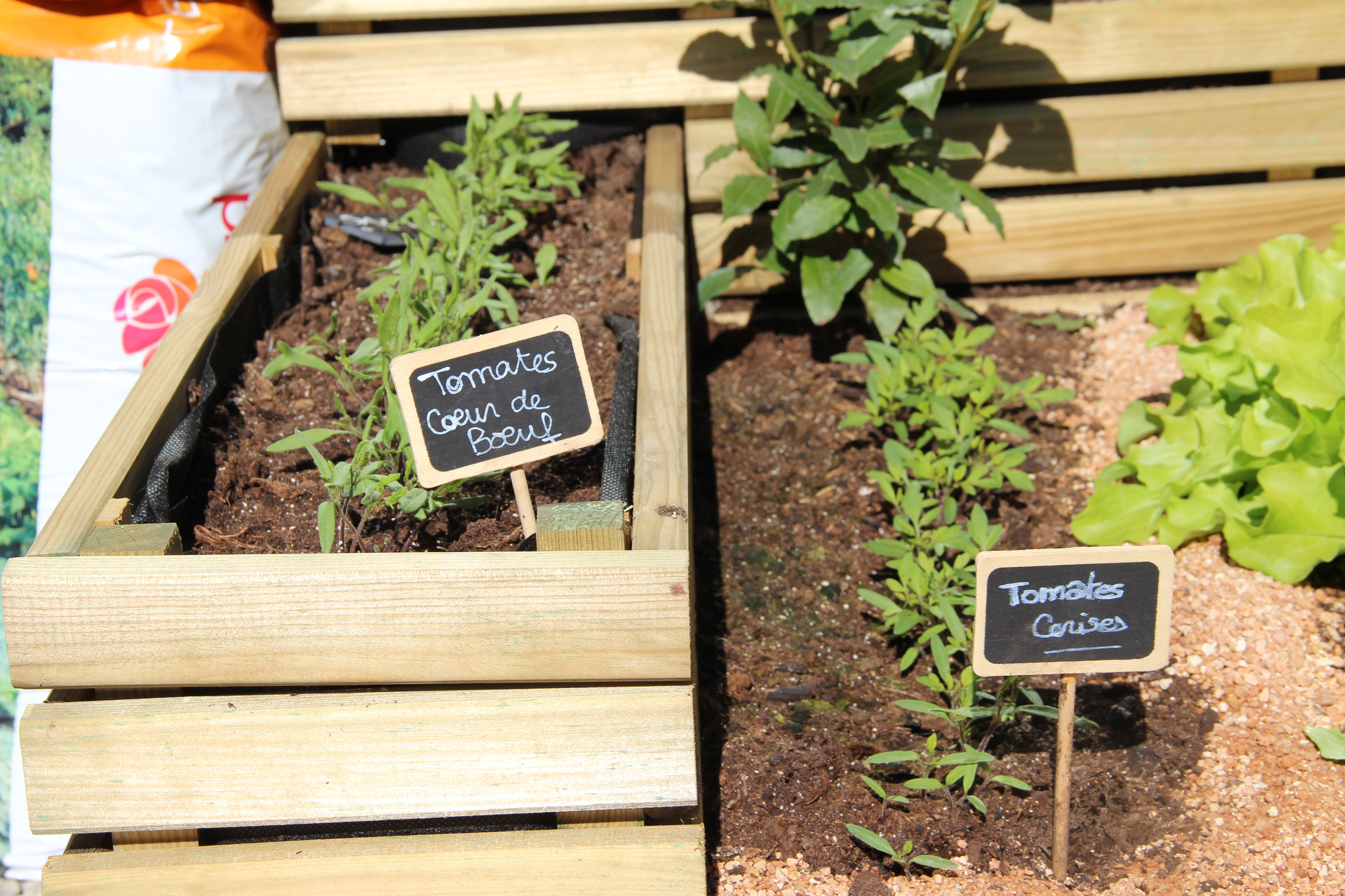 tomates-blog-delbard-jardin-potager