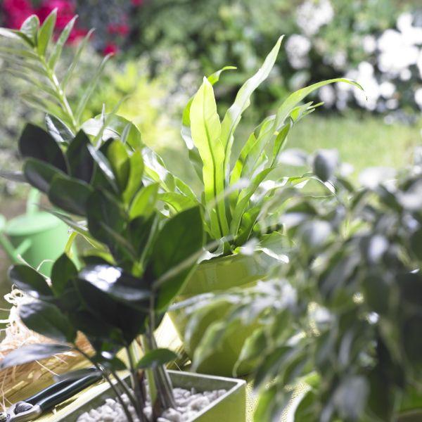 Plante verte mon chez moi for Recherche sur les plantes vertes