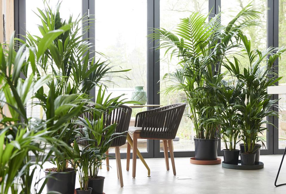 kentia plante interieur entretien blog delbard