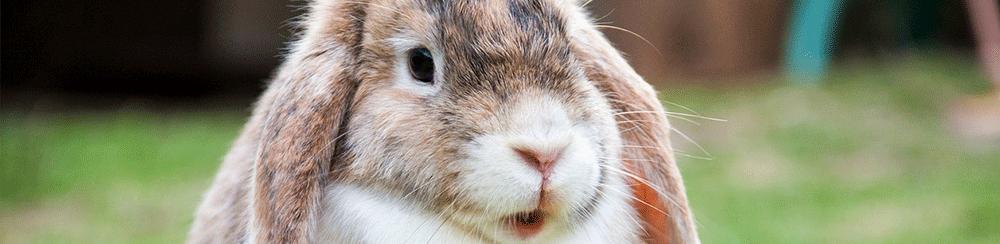Animaux lapin voyage transports méthode conseil Blog Delbard