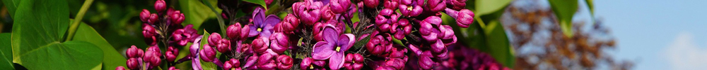 travaux mai jardin plantes delbard