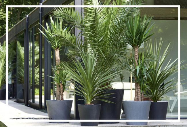 palmier-arbre-astuce-decoration-jardin-blog-delbard-ete