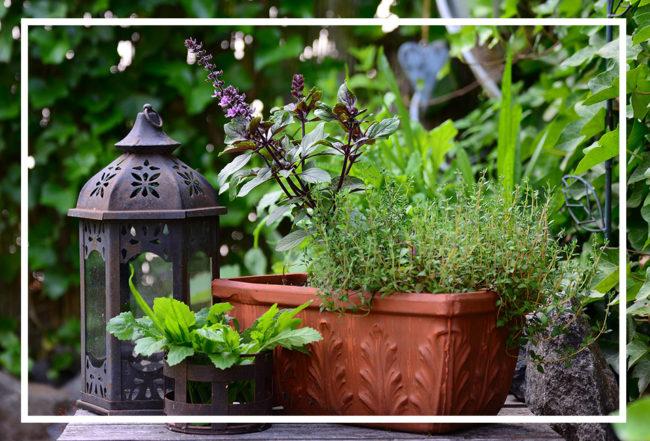 jardinière aromatique