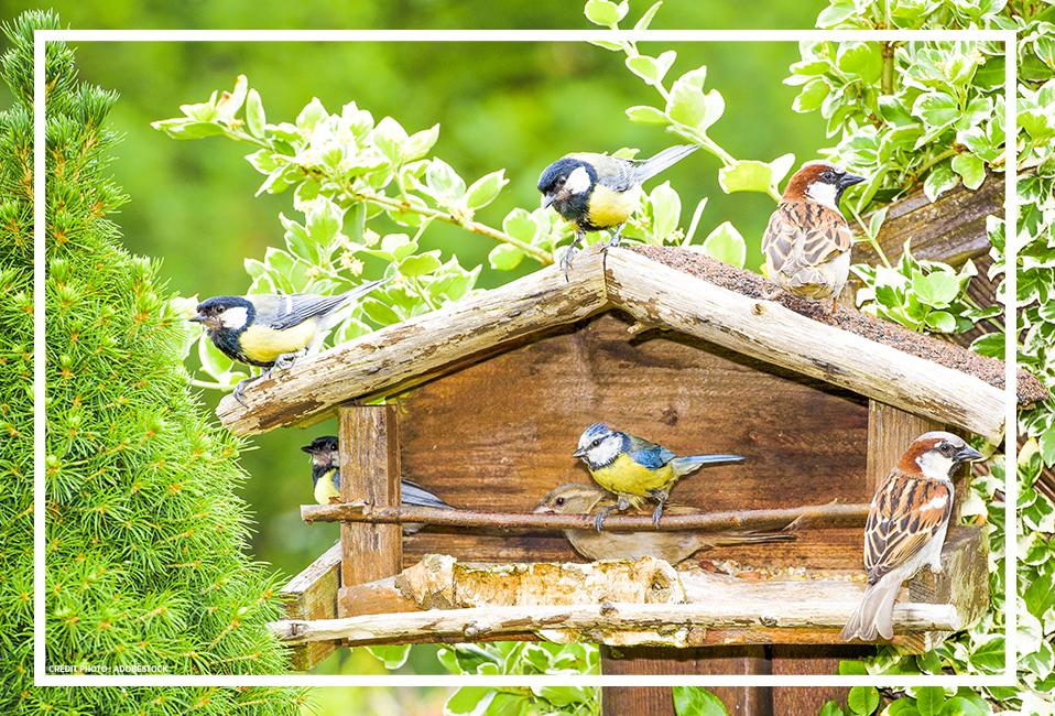 Les oiseaux chantent l'été