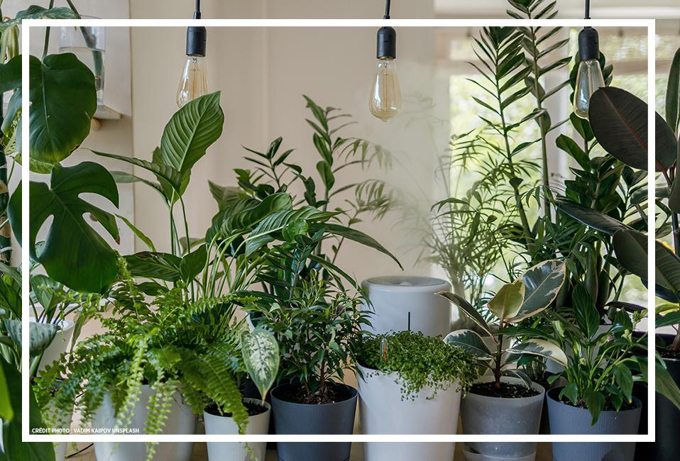 plantes-intérieur-hiver-soin-entretien