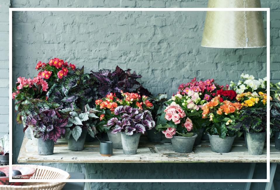 Plante verte ou fleurie facile conseils