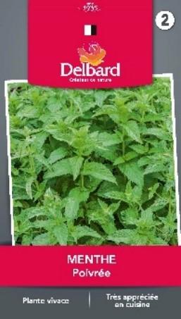 Plantation Graines Menthes Blog Delbard jardin