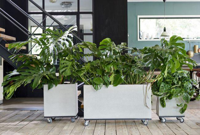 Monstera plante entretien décoration salon maison juillet Blog Delbard