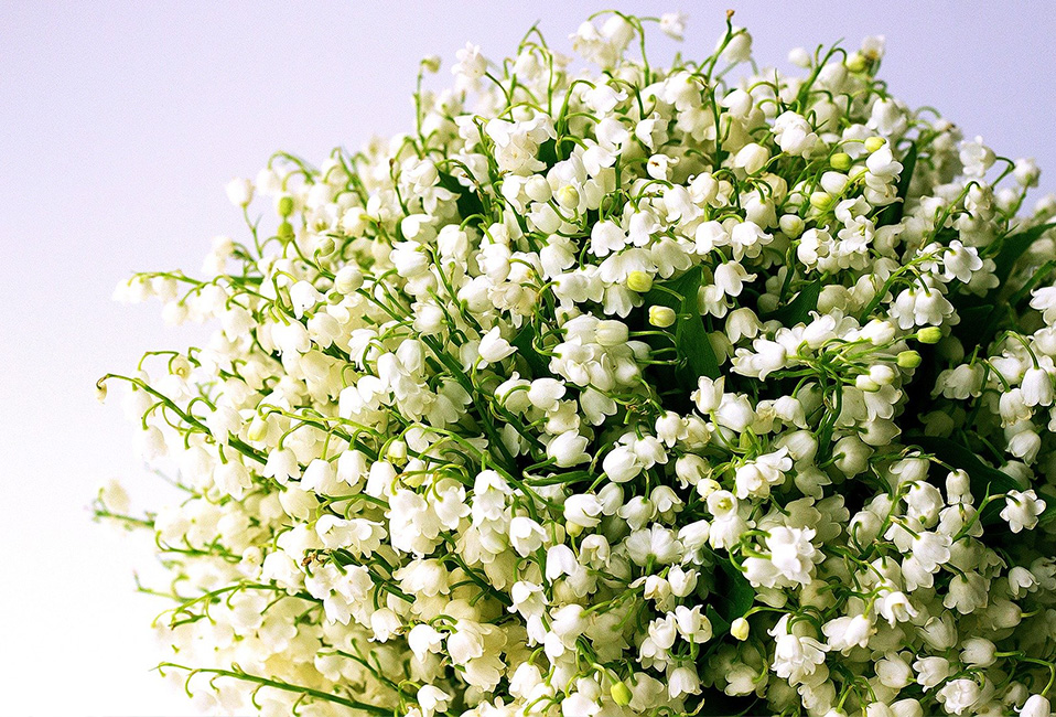 muguet bouquet parfums senteurs jardin blog delbar