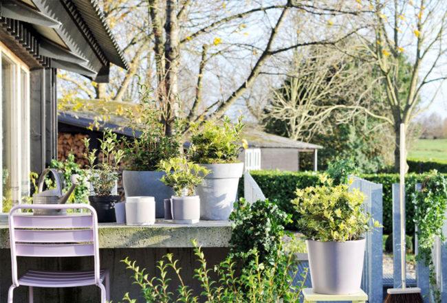 Osmanthus pot entretien astuces conseil plantation fêtes jardin intérieur houx maison blog delbard