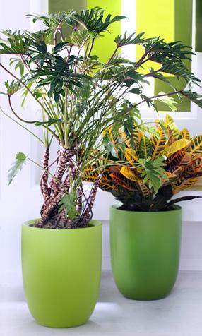Philodendron plante végétal arrosage terre terreau entretien Blog Delbard