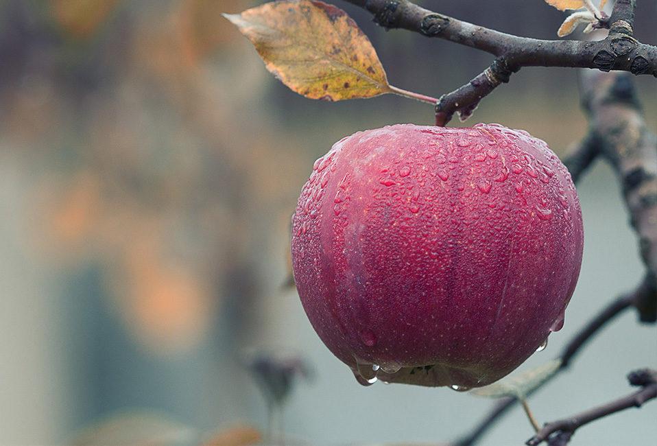 Travaux automne jardinages conseils plantation entretien agrumes fruitiers gazon bulbes vicaces plantes Blog Delbard
