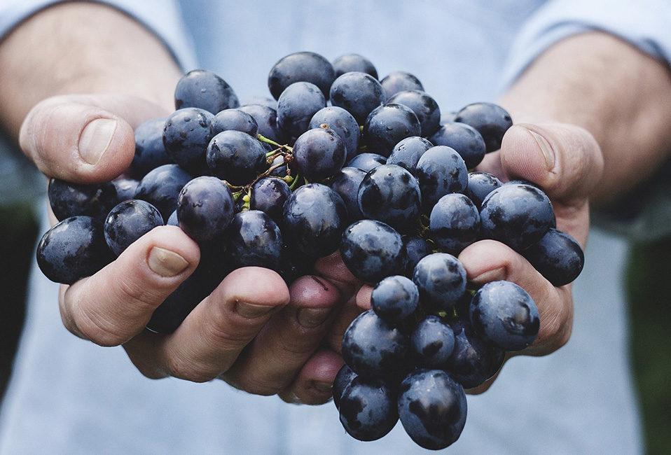 Raisins fruits automne conservation cuisine Blog Delbard