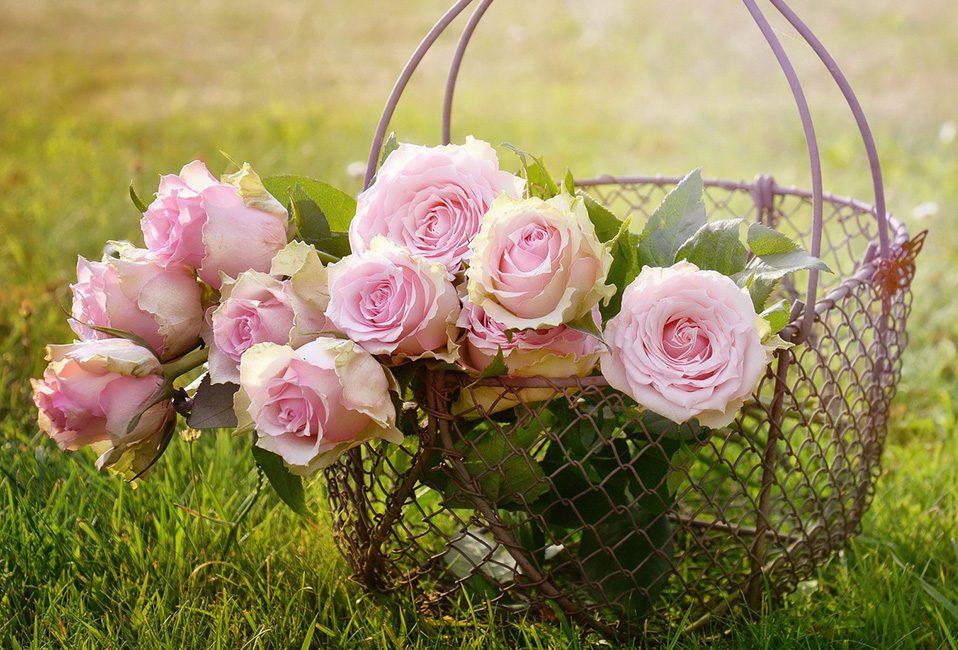 Roses Blog Delbard entretien mois juin été saison astuces conseils