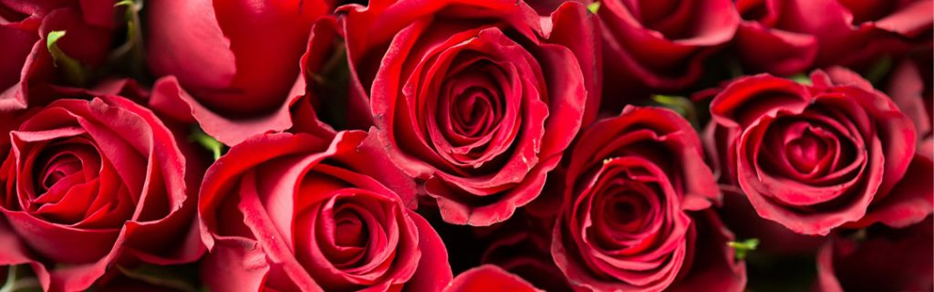 roses-rouges-saint-valentin-bouquet