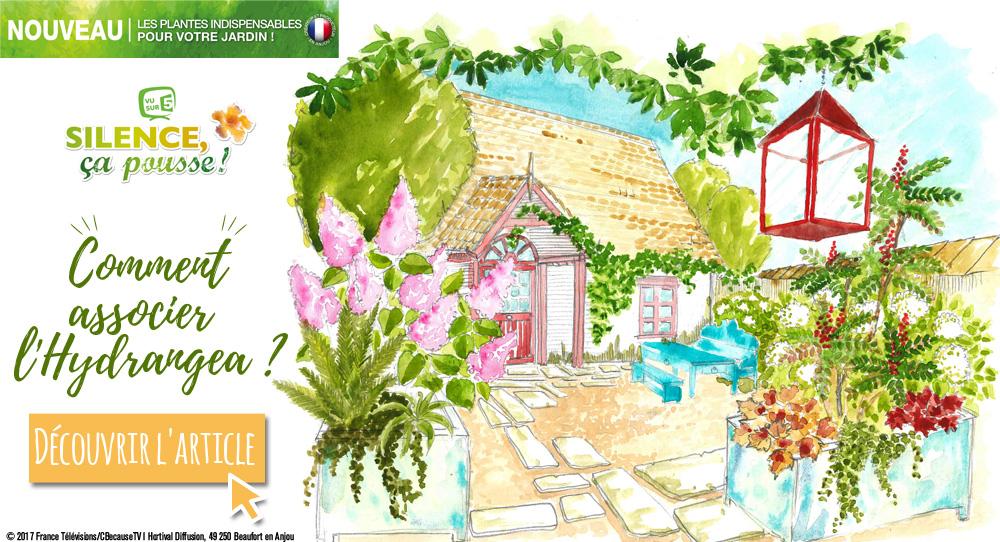 Blog-delbard-jardin-conseils-astuces-hortensia